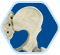 Bone Marrow Icon